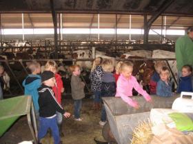 Bij de koeien in de stallen